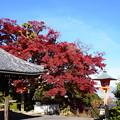 写真: 釈迦堂前の風景