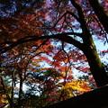 写真: 紅葉に包まれて