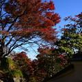 写真: 頭上の紅葉