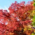写真: 紅葉のお見送り