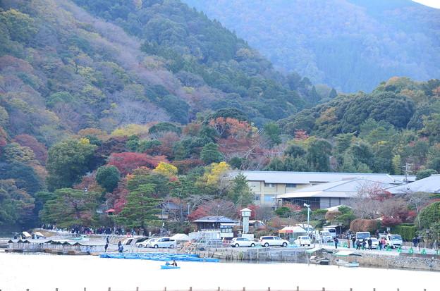 写真: 色付く嵐山