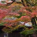 写真: 宝厳院の紅葉