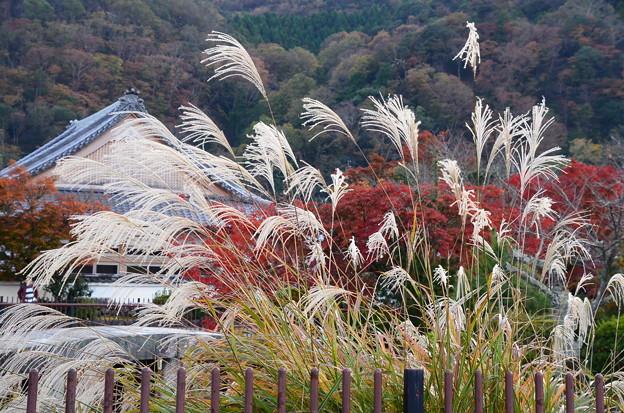 紅葉と薄の天龍寺