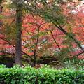 写真: 色付き進む宝厳院