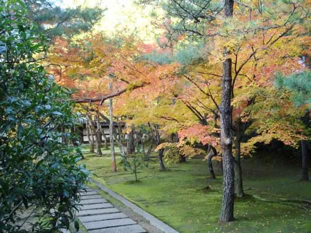 竜翔寺の色付き