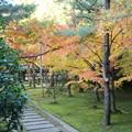 Photos: 竜翔寺の色付き