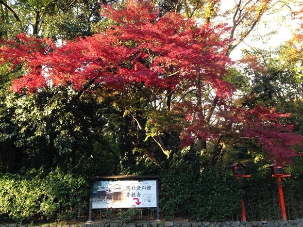 下鴨神社の紅葉