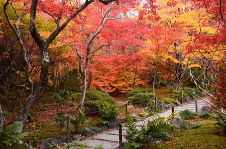 紅葉見頃の宝筐院