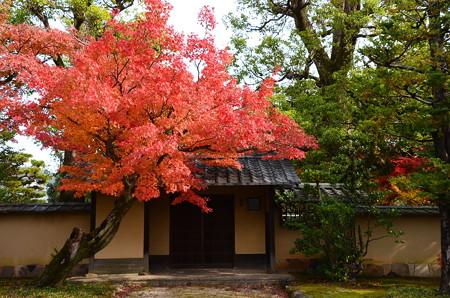 大覚寺近くの紅葉