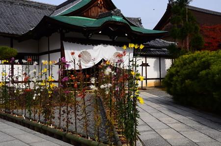 嵯峨菊(サガギク)