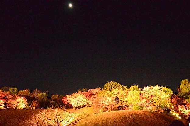 ライトアップされた紅葉とお月様