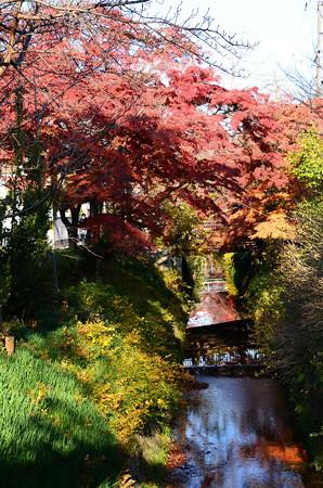 紅葉と松ヶ崎疎水