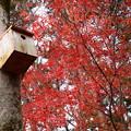 巣箱と紅葉