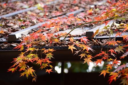 下鴨神社の秋模様