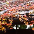 写真: 下鴨神社の秋模様