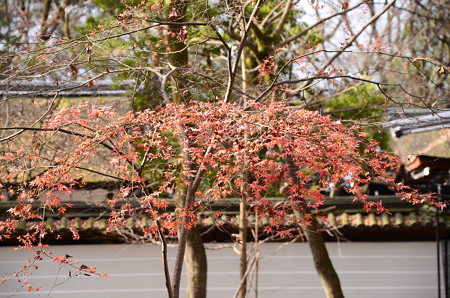 河合神社前の紅葉