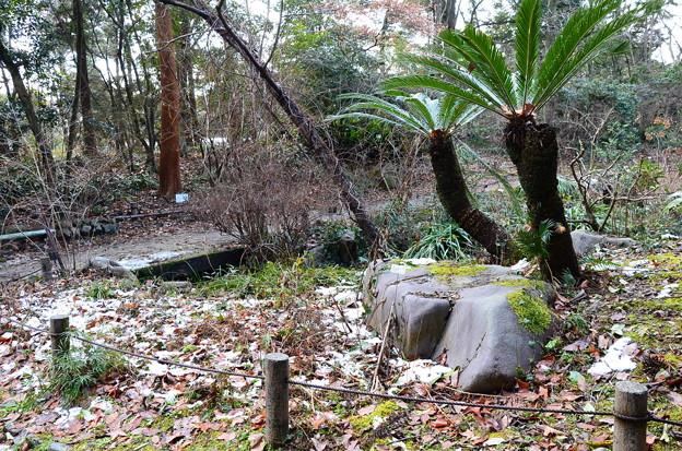 雪の残る生態園
