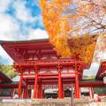 写真: 近江神宮,藍天,楓?。/ おうみじんぐう