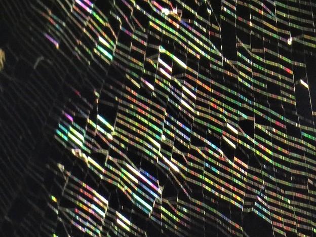 虹色の蜘蛛の巣(庭)_6031