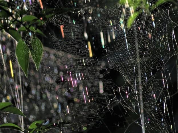虹色に輝く蜘蛛の巣_7247