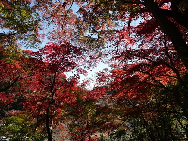 東郷公園171119-090