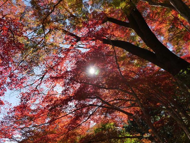 東郷公園171119-091