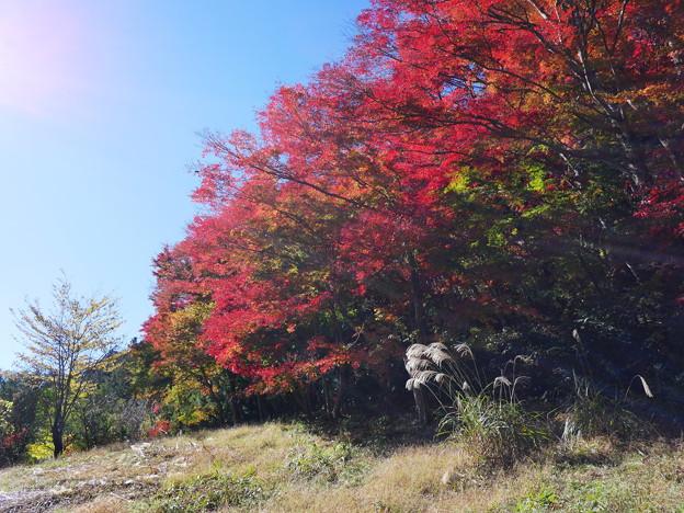 東郷公園171119-094