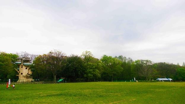 県立相模原公園 芝生