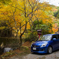 Photos: スイフトと紅葉