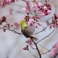 サンヨン で撮った 野鳥類-2