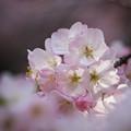 サンヨン で撮った 花/水-6