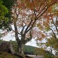 Photos: 171113_箱根・小田急山のホテル_紅葉風景_F171113G2820_MZD12ZP_FH_for C-SG_FS5_X8Ss