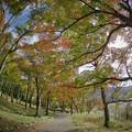 Photos: 171113_箱根・湖尻_紅葉風景_E17111347977_MZD8FP_X8Ss