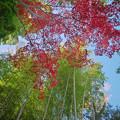 Photos: 171128_伊豆市・修善寺川周辺_紅葉風景_F171128G2986_MZD12ZP_X8Ss