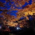 Photos: 171128_伊豆市・修善寺町・虹の郷_ライトアップ紅葉風景_F171128G3074_MZD12ZP_X8Ss