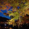 Photos: 171128_伊豆市・修善寺町・虹の郷_ライトアップ紅葉風景_F171128G3077_MZD12ZP_X8Ss