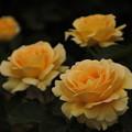四季の花(67)