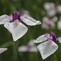 四季の花(68)