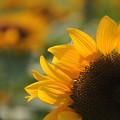 写真: 黄色い炎