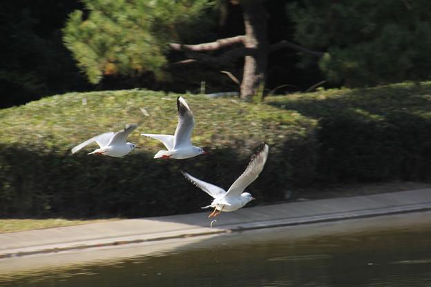 鳥尾(トリオ)