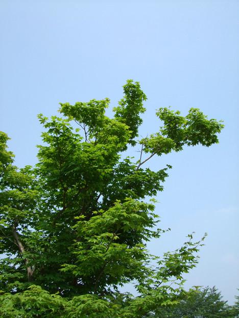 090621_難波田城公園_57