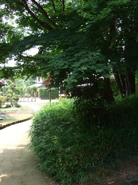 090621_難波田城公園_16