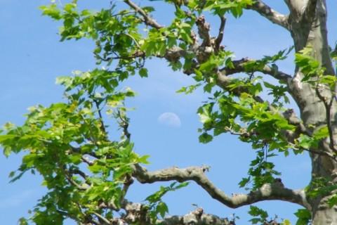 新宿御苑で月見1