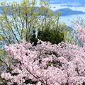 写真: 春の青さは今日も 瀬戸内を包んでいた──