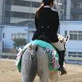 写真: 川崎競馬の誘導馬04月開催 桜Verその1-120409-11-large