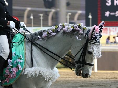 川崎競馬の誘導馬04月開催 桜Verその1-120409-14