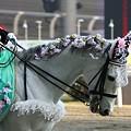 写真: 川崎競馬の誘導馬04月開催 桜Verその1-120409-14-large
