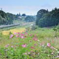 コスモスと富士山とローカル電車