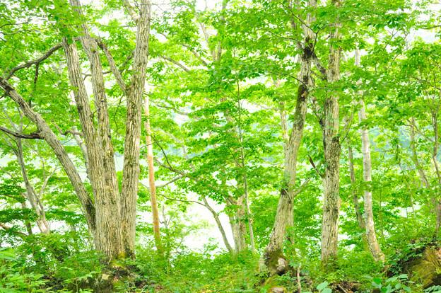 琵琶池湖畔