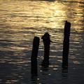 写真: 朝日差す湖面